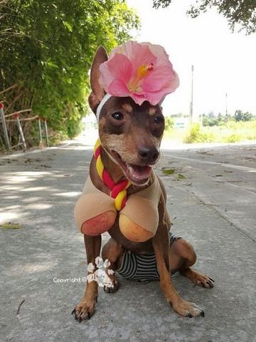 Chú chó bất ngờ nổi tiếng vì gắn hoa quả đầy đầu - 6