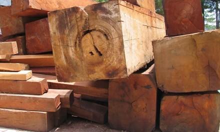 Bộ Công an đồng loạt kiểm tra các xưởng gỗ ở Lâm Đồng - 1