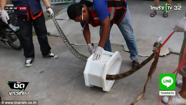 Thái Lan: Trăn 4m chui từ bồn cầu tấn công người phụ nữ - 2