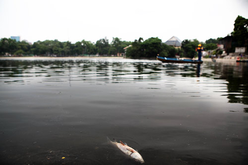 Hà Nội: Cá chết bất thường, nổi trắng hồ Thiền Quang - 3