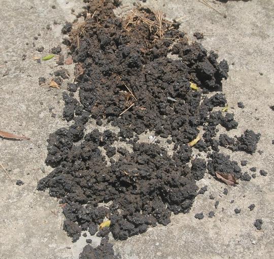Chất thải từ nhà máy Formosa được chôn lấp ở nhiều nơi - 2