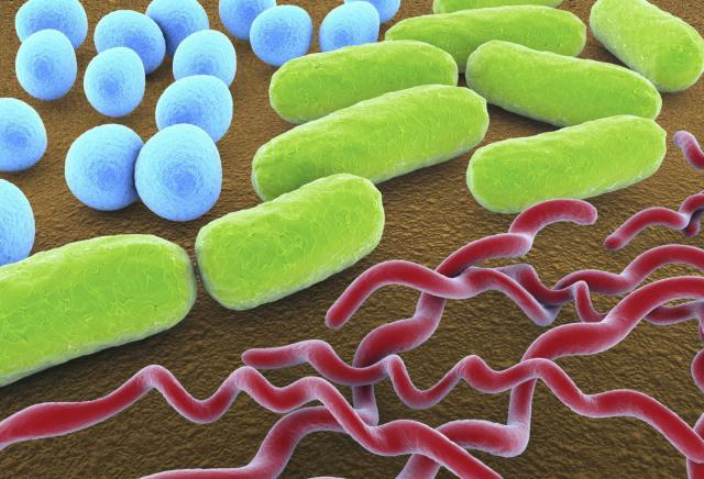 """Họa diệt vong khi kháng sinh """"bó tay"""" trước vi khuẩn - 4"""