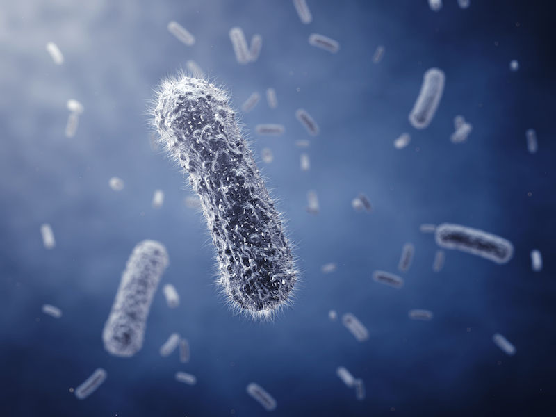 """Họa diệt vong khi kháng sinh """"bó tay"""" trước vi khuẩn - 5"""
