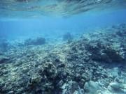 Thế giới - Người TQ săn trai khổng lồ, tàn phá Biển Đông thế nào