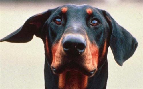 Chú chó hy sinh thân mình cứu chủ khỏi bầy rắn độc - 2