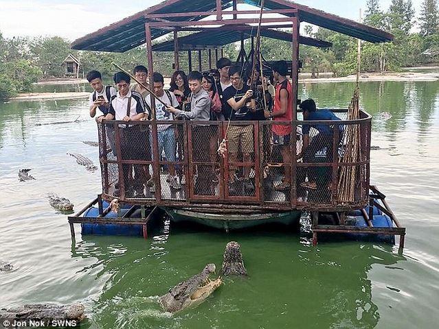 Rợn người du khách TQ dùng bè tạm bợ cho bầy cá sấu ăn - 1