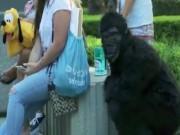 """""""King Kong"""" xuất hiện, người dân bỏ chạy toán loạn"""