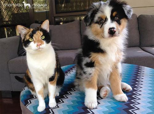 Truyền thuyết kể rằng: Chó mèo có cùng tổ tiên - 2