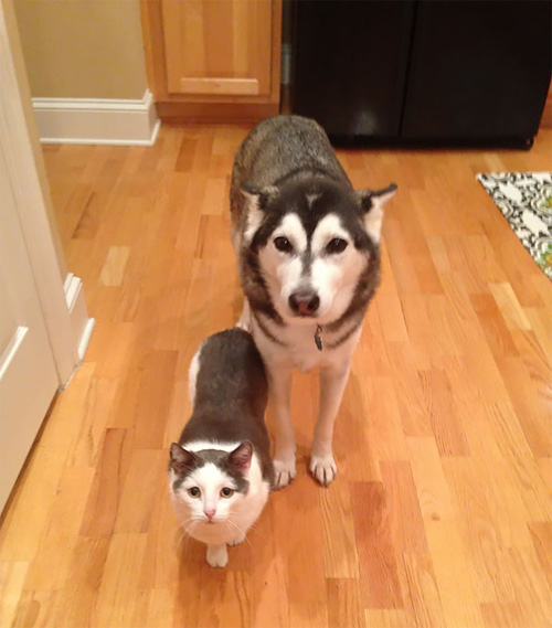 Truyền thuyết kể rằng: Chó mèo có cùng tổ tiên - 3