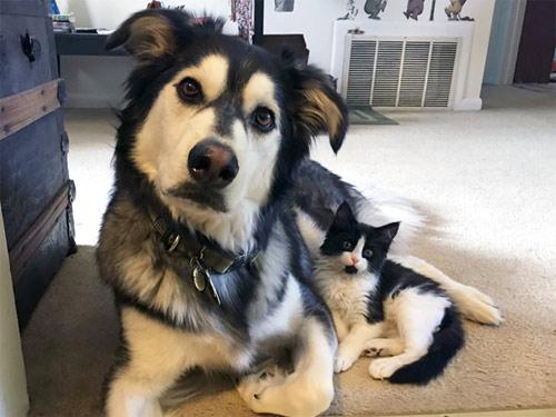 Truyền thuyết kể rằng: Chó mèo có cùng tổ tiên - 4