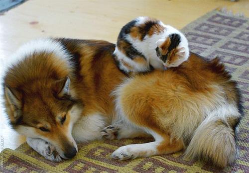 Truyền thuyết kể rằng: Chó mèo có cùng tổ tiên - 6