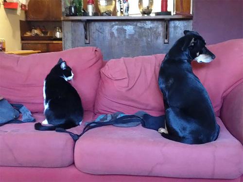 Truyền thuyết kể rằng: Chó mèo có cùng tổ tiên - 7