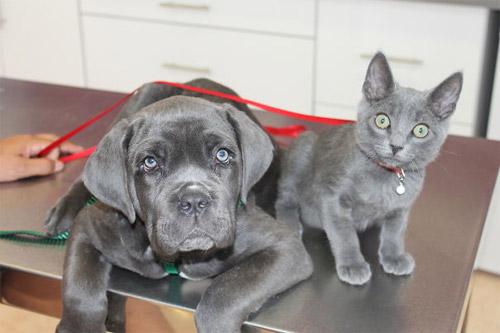 Truyền thuyết kể rằng: Chó mèo có cùng tổ tiên - 8