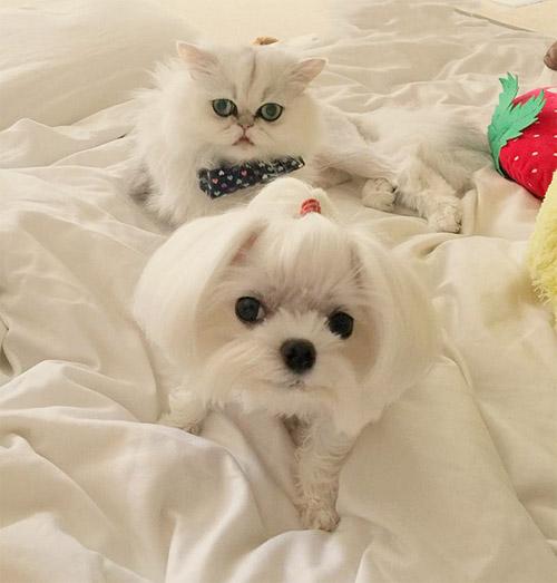 Truyền thuyết kể rằng: Chó mèo có cùng tổ tiên - 9