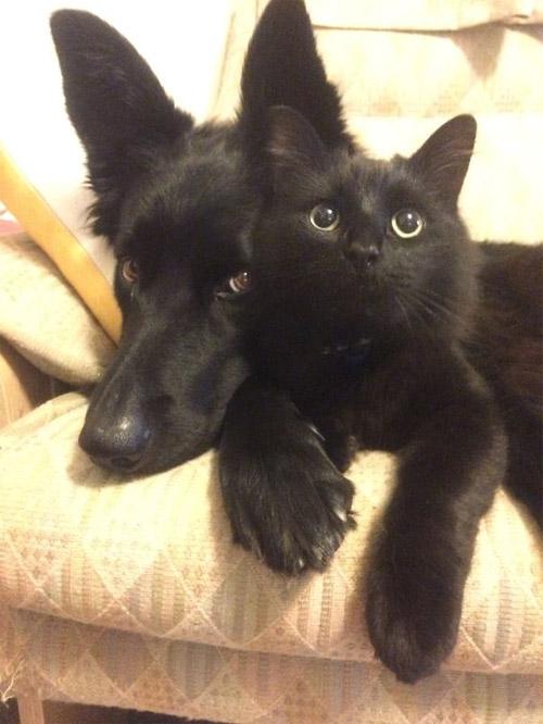 Truyền thuyết kể rằng: Chó mèo có cùng tổ tiên - 11
