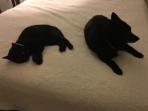 Truyền thuyết kể rằng: Chó mèo có cùng tổ tiên - 13