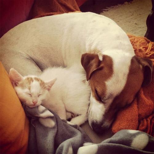 Truyền thuyết kể rằng: Chó mèo có cùng tổ tiên - 17