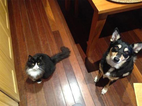 Truyền thuyết kể rằng: Chó mèo có cùng tổ tiên - 18