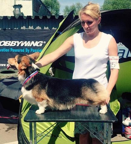 """Phó thủ tướng Nga """"chi bạo"""" cho chó cưng đi chuyên cơ - 3"""