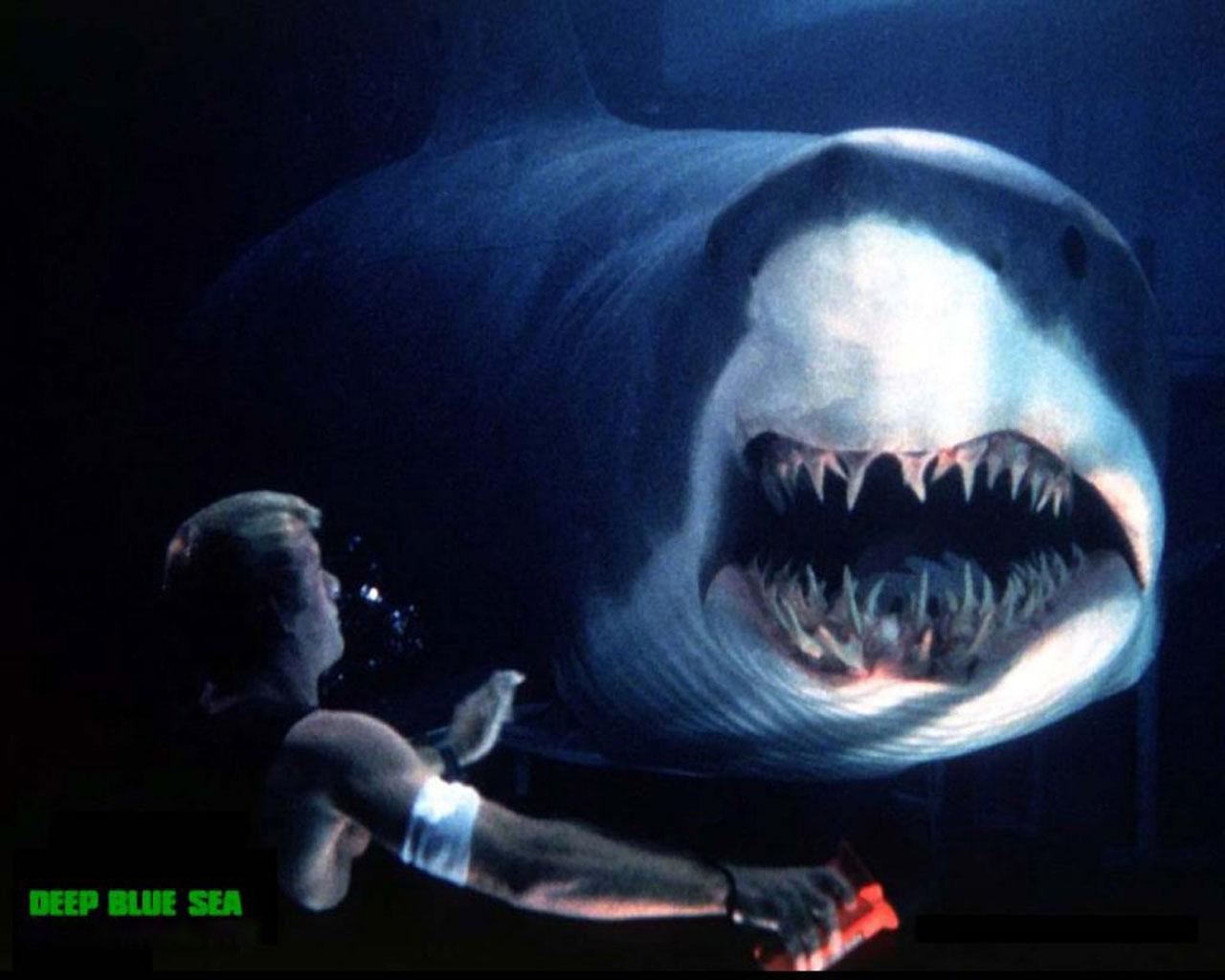 Video phim: Thót cảnh người đẹp một mình giết cá mập - 5
