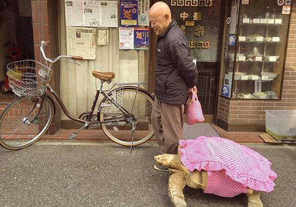 Clip: Cụ ông dắt cụ rùa đi dạo xôn xao Nhật Bản - 1