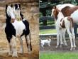 Bạn có tin, chó và ngựa đều sinh ra từ một mẹ?