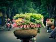 Hà Nội, mùa hoa về trên phố