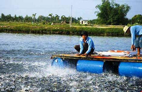 Hàng trăm sản phẩm thức ăn thủy sản lưu hành trái phép - 2