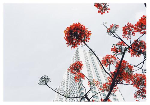 Test-drive iPhoneography: trở thành nhiếp ảnh gia chuyên nghiệp với iPhone - 4
