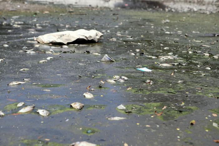 Hà Nội: Cá chết trắng hồ Ba Mẫu - 2