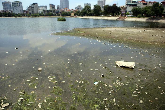 Hà Nội: Cá chết trắng hồ Ba Mẫu - 1