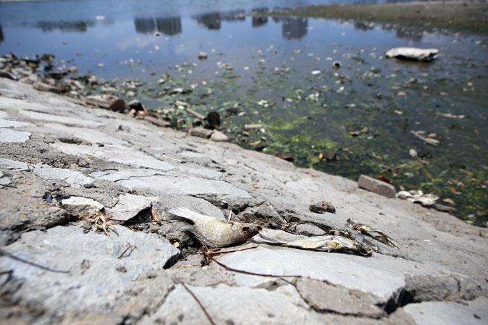 Hà Nội: Cá chết trắng hồ Ba Mẫu - 5