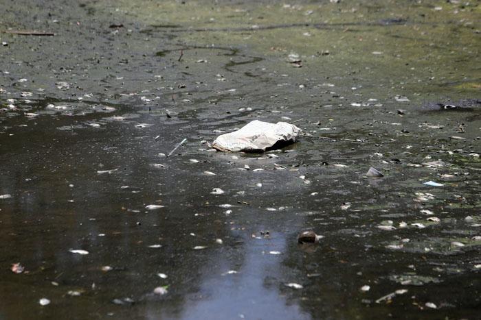 Hà Nội: Cá chết trắng hồ Ba Mẫu - 3