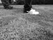 Ảnh thực tế chụp bởi camera trắng đen của Huawei P9