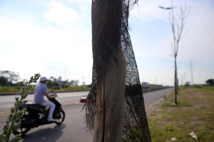 Hà Nội: Cây xanh trên đường nghìn tỷ hoá củi khô - 5