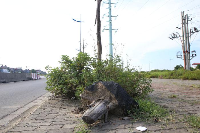 Hà Nội: Cây xanh trên đường nghìn tỷ hoá củi khô - 6
