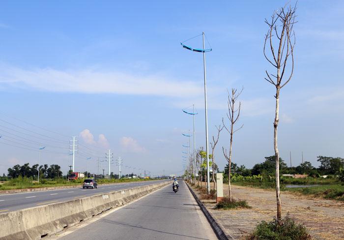 Hà Nội: Cây xanh trên đường nghìn tỷ hoá củi khô - 2