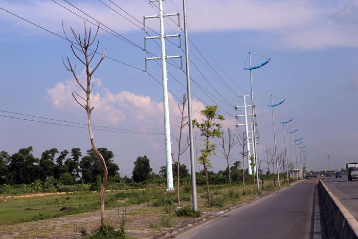 Hà Nội: Cây xanh trên đường nghìn tỷ hoá củi khô - 1