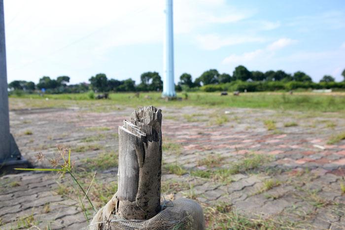 Hà Nội: Cây xanh trên đường nghìn tỷ hoá củi khô - 7