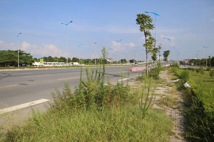 Hà Nội: Cây xanh trên đường nghìn tỷ hoá củi khô - 10