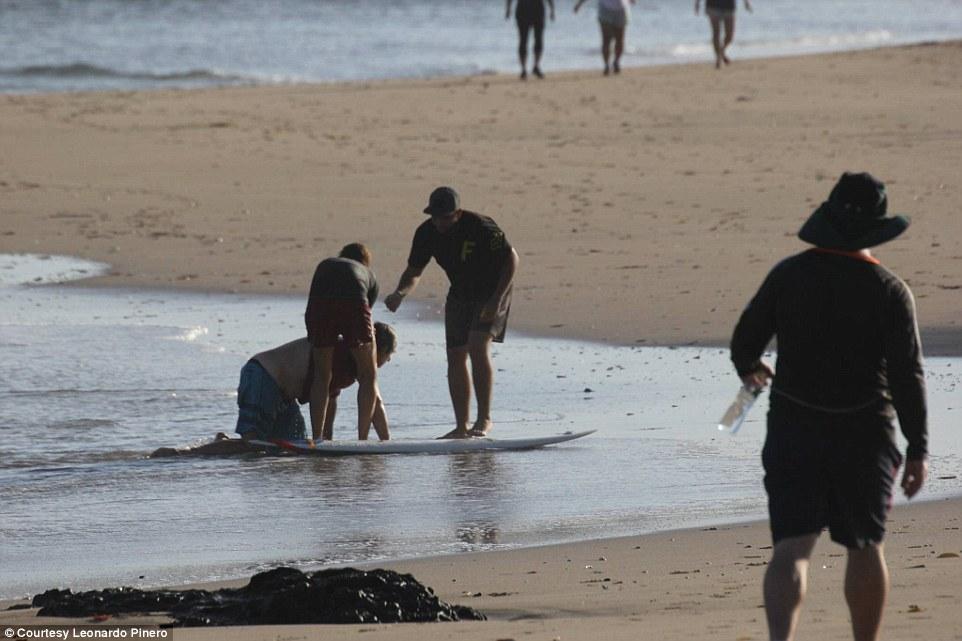 Cá sấu ngoạm đứt chân du khách ở bãi biển Costa Rica - 1