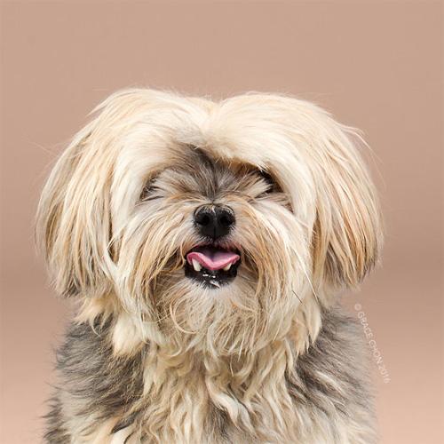 """Chó """"biến hình"""" sang chảnh khi thay đổi kiểu đầu - 1"""