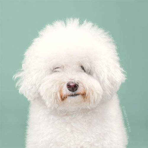 """Chó """"biến hình"""" sang chảnh khi thay đổi kiểu đầu - 3"""