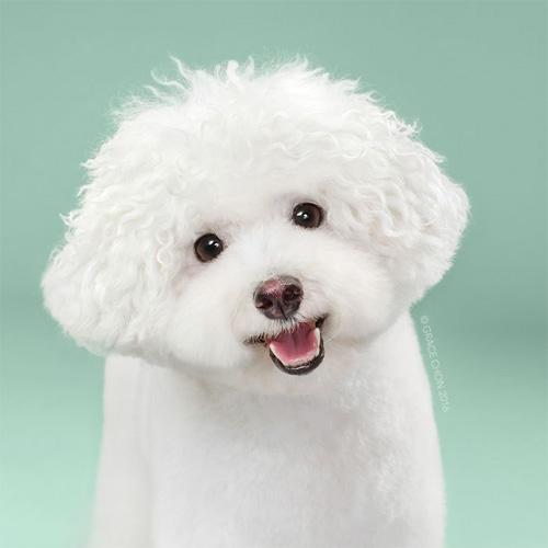 """Chó """"biến hình"""" sang chảnh khi thay đổi kiểu đầu - 4"""