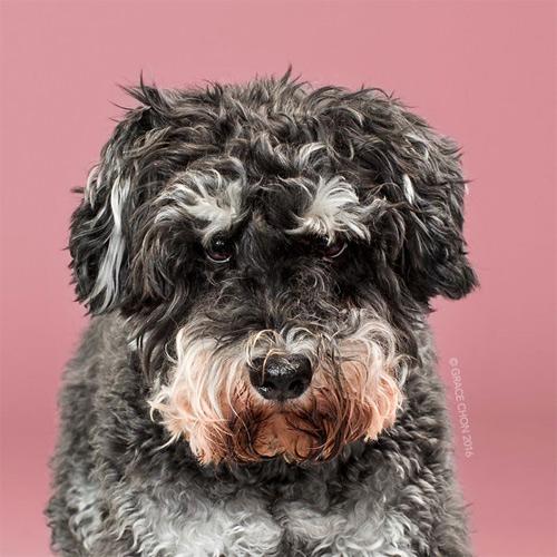 """Chó """"biến hình"""" sang chảnh khi thay đổi kiểu đầu - 5"""