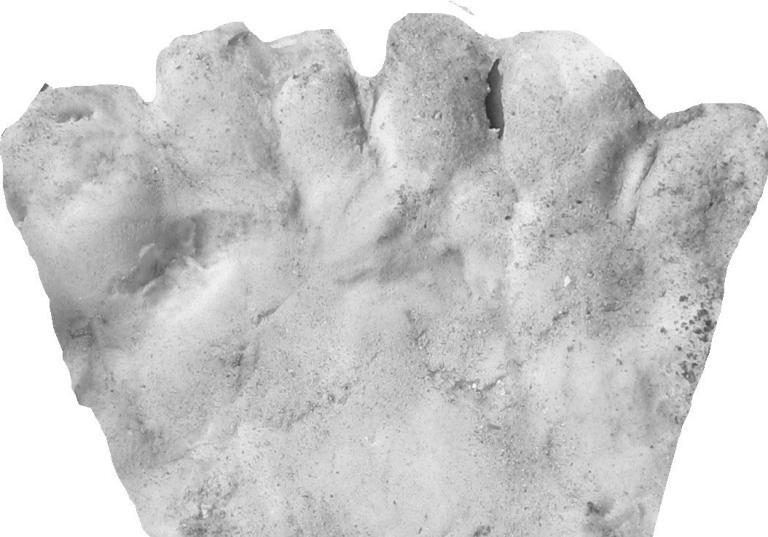 """Chân tay 6 ngón là """"mốt"""" thời cổ đại ở Mỹ - 3"""