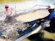 """""""Động trời' ở Tổng cục Thủy sản: Làm rõ trách nhiệm cá nhân liên quan"""