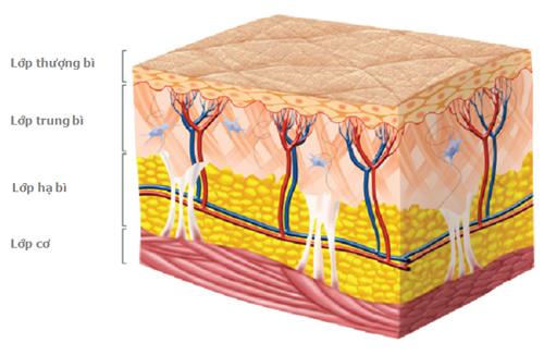 Nếp nhăn xuất hiện do mất collagen, chưa hẳn đã đúng! - 2