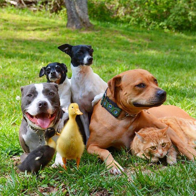 """Một cặp vợ chồng trẻ có tên là & nbsp; & nbsp;Kasey Boggs đã giải cứu 7 con vật và giờ đây, chúng trở thành những người  """" anh em """"  thân thiết với nhau như ruột thịt."""