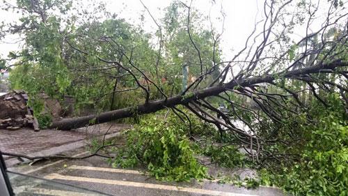 Bão số 1 đã suy yếu thành áp thấp nhiệt đới - 3